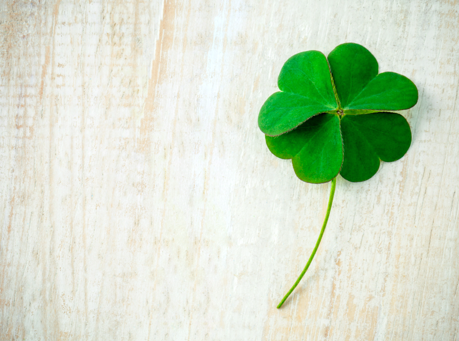 What are the odds of finding a four-leaf clover?