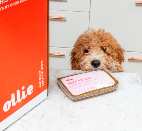 The Benefits of a Good Dog Food. Ollie Offers Your Dog Exactly What it Needs!