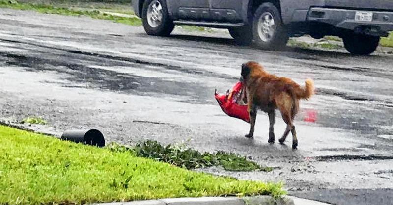Dog Runs Away Daily So Owner Secretly Follows Him