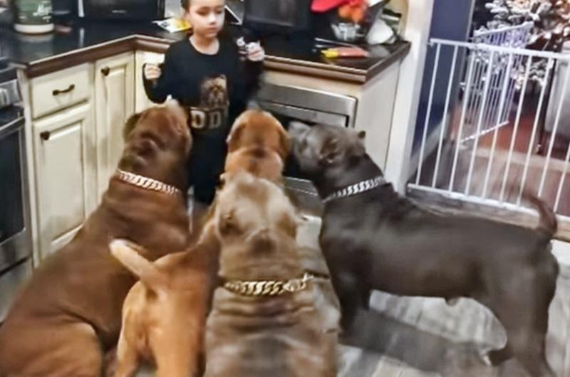 Dad Leaves Girl With 6 Pitbulls, Mom Checks Camera