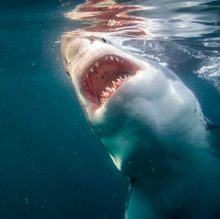 JAWS is a famous summer movies. How many are there in total?